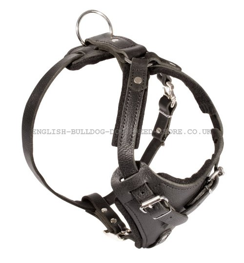 Strong Leather Dog Harness UK for Bullmastiff