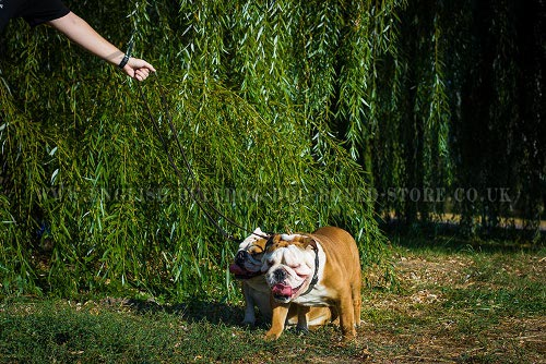 English Bulldog Leashes UK
