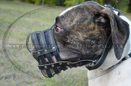 Bulldog Muzzle for Safe Walking and Training