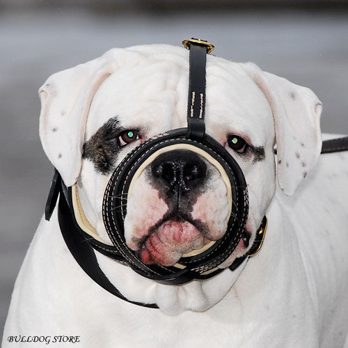 American Bulldog Dog Muzzle UK