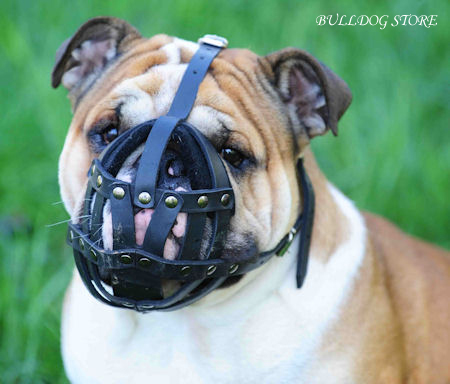 leather dog muzzle for english