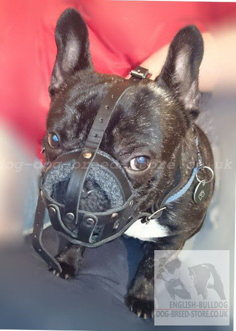 Soft Muzzle for French Bulldog