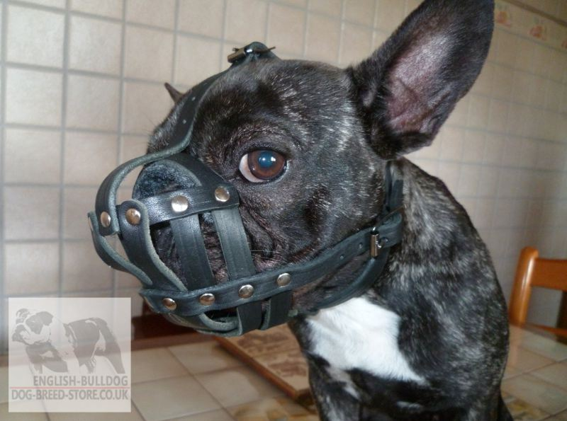 French Bulldog Muzzle Of Leather For Walks 163 28 90