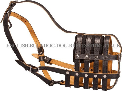 Bulldog Muzzle for Sale