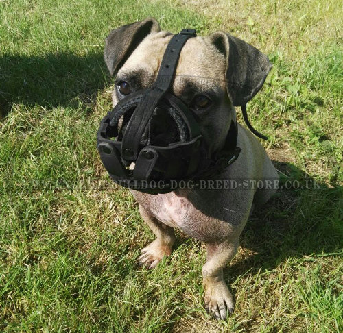 Muzzle for a French Bulldog