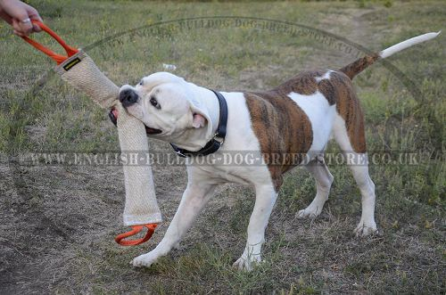 english bulldog training dog tugs jute for english bulldog training 8406