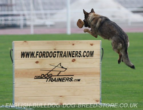 IGP Dog Jumps