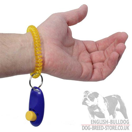 Clicker for English Bulldog Training