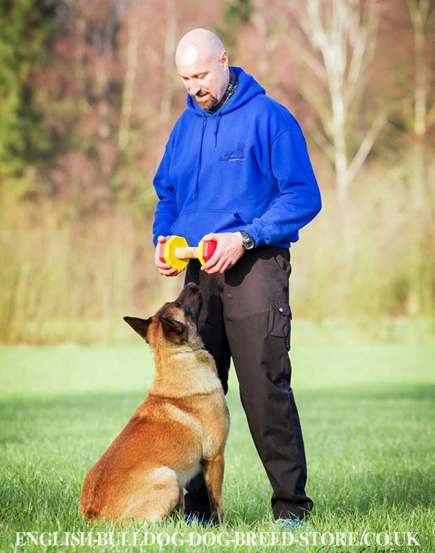Dog Training Dumbbell Retrieve