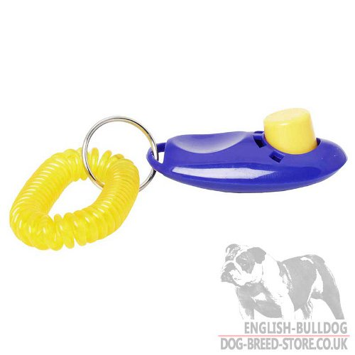 English Bulldog Clicker Training