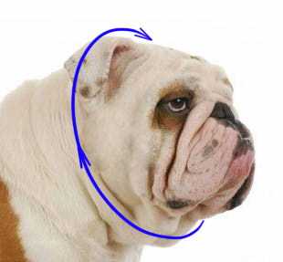 Prong Collar Sizing Image