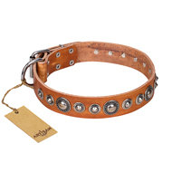"English Bulldog Collar with Decorations ""Daily Chic"" Artisan"