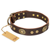 "English Bulldog Collar ""One-of-a-Kind"" FDT Artisan Brown Leather"