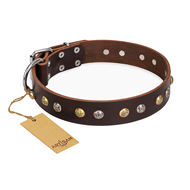 "English Bulldog Collar Brown Leather ""Rare Flower"" FDT Artisan"