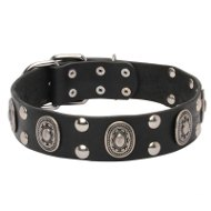 English Bulldog Collar Leather with Silver-Like Plates and Studs
