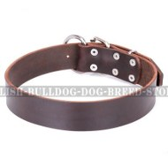 English Bulldog Collar of Classic Design in Dark Brown Leather