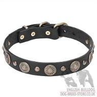 English Bulldog Collar of Leather with Brass Flowers and Studs