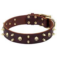 Showy Rock Dog Collar with Brass Skulls and Spikes for Bulldog