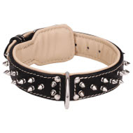 Padded Dog Collar for Bulldog, Leather, Nappa and Nickel Spikes