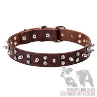 English Bulldog Collar Leather with Chromized Spikes and Stars