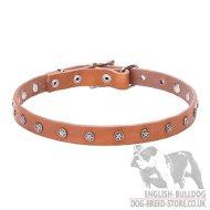 English Bulldog Collar with Star-Shaped Studs on Leather