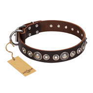 "English Bulldog Collar ""Step and Sparkle"" by FDT Artisan, Brown"