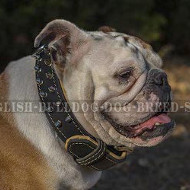 Two-Ply Leather Dog Collar Spiked in Style for English Bulldog
