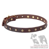 English Bulldog Collar with Brass Stars-Studs, Narrow Leather