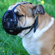 Leather muzzle for english bulldog