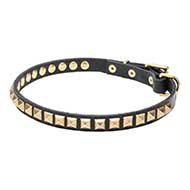 Necklace Dog Collar Sparkling Brass Studs for English Bulldog