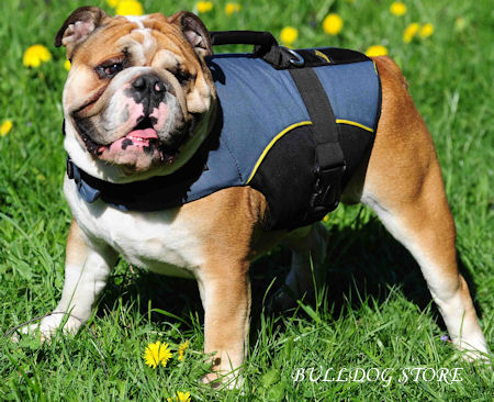 English Bulldog Clothes UK