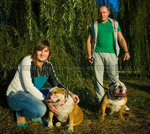 English Bulldogs Training UK