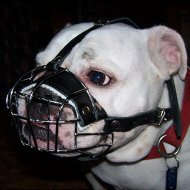 wire basket muzzle for english bulldog