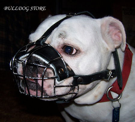 Best muzzle for English Bulldog