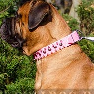 Female Bullmastiff Collar in Pink Leather with Spikes and Studs