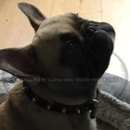 French Bulldog Leather Collar with Spikes for Walking in Style