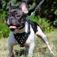 English Bulldog Leashes