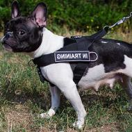 No Pull Dog Training Harness of Nylon for French Bulldog