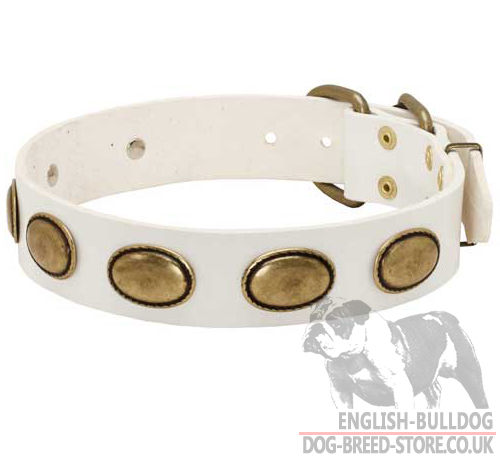 White Leather Dog Collar with Oval Brass Plates for Bulldog