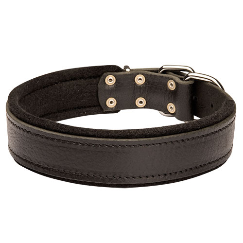 Bestseller! Comfortable Leather Bulldog Collar with Soft Felt Padding