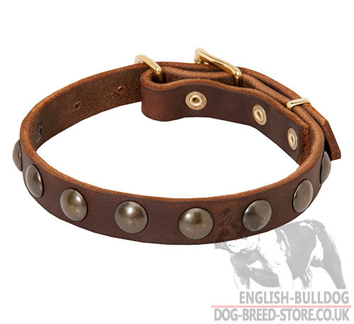 Boston Terrier Collar for Walks, Narrow Leather and Brass Studs