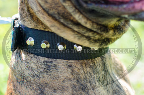Boxer Dog Collar of Nylon with Pyramids for Walks and Training