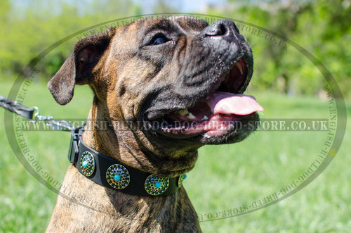 Boxer Dog Leather Collar with Blue Stones and Vintage Brooches