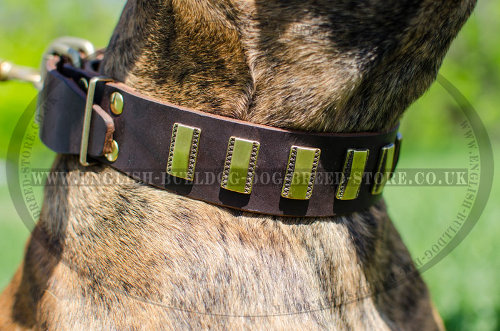 Boxer Dog Leather Collar with Vertical Brass Plates for Walking