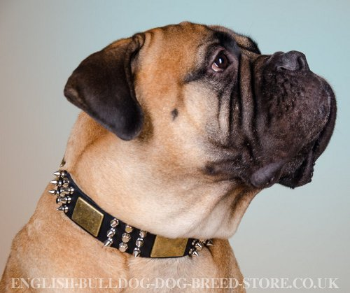 Chic Dog Collar for Bullmastiff with Spikes, Cones and Plates