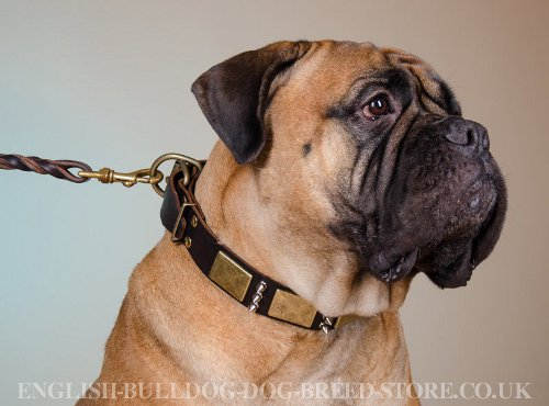 Decorated Leather Dog Collar a La Antique for Strong Bullmastiff