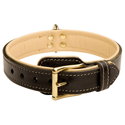 Bestseller! English Bulldog Collar Nappa Padded with Fur Saver Plate