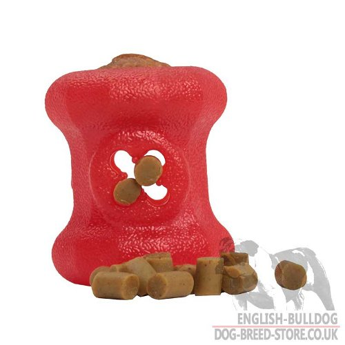 Bestseller! Chew and Dental Dog Toy Small Size for English, French Bulldogs