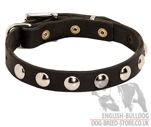 Dog Collar for Pug Walking of Narrow Leather with Studs Row