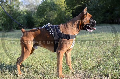 Dog Harness for a Boxer of Nylon with Handle for Multiply Use